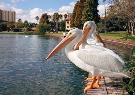 Preferred Coral Springs Florida Hotels