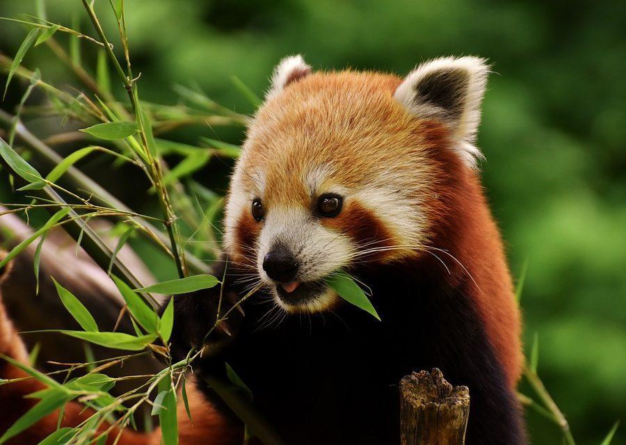 Visit Americas 5th Zoo, in Binghamton, New York